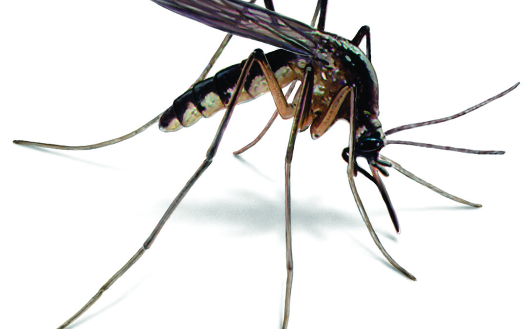 West Nile Virus Detected in Richland County