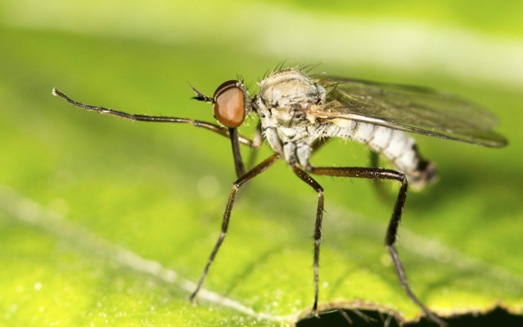 Stop Mosquitoes and Ticks