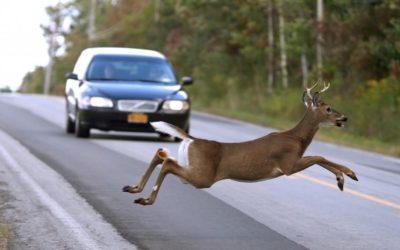 Deer Crash Warning