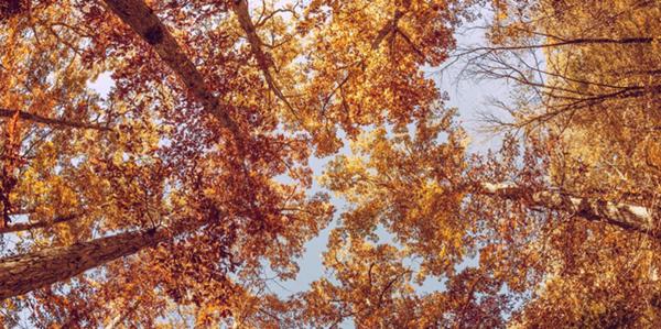Fall Hike for Health